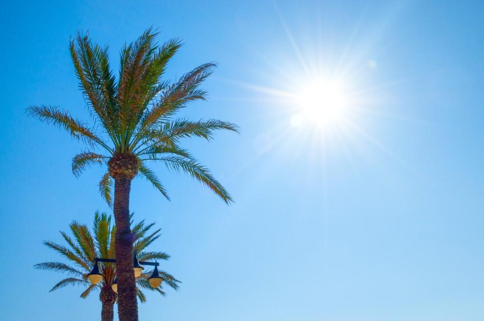 Palmiers en Espagne