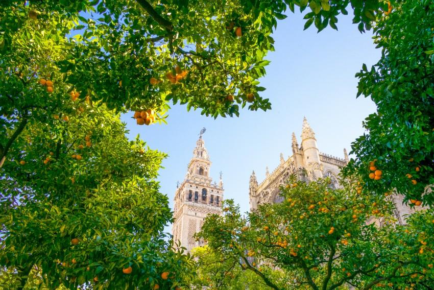 Venez découvrir Séville au printemps